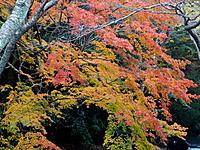 Hyakusaiji050